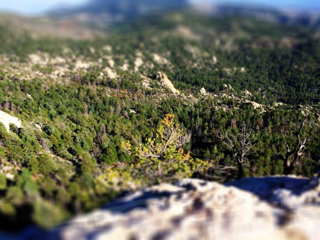 Eden took this picture of Wilderness of Rocks from Lemmon Rock fire lookout.
